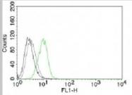 AM10127PU-N - CDKN1B / KIP1