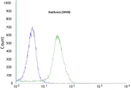 AM11194PU-S - Stathmin / STMN1