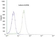 AM21047PU-M - Cadherin-2