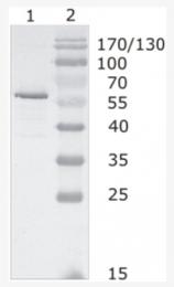 AM26089PU-N - HIV-1