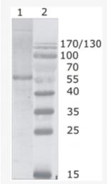AM26090PU-N - HIV-1