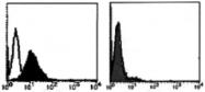AM26423AF-N - CD95 / FAS