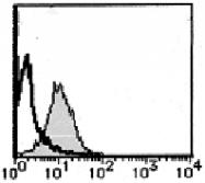 AM26697FC-N - CD178 / Fas Ligand