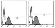 AM26428AF-N - CD29 / Integrin beta-1