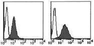 AM26428RP-N - CD29 / Integrin beta-1