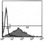 AM26429AF-N - CD154 / CD40L