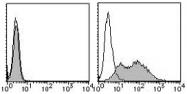 AM26431RP-N - Mesothelin