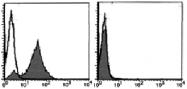 AM26434AF-N - CD178 / Fas Ligand