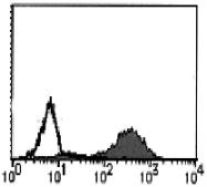 AM26434BT-N - CD178 / Fas Ligand