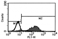 AM26434FC-N - CD178 / Fas Ligand