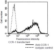 AM26437AF-N - CD191 / CCR1