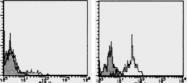 AM26437RP-N - CD191 / CCR1