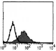 AM26443AF-N - CD178 / Fas Ligand