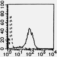 AM26444AF-N - Podocalyxin / PODXL