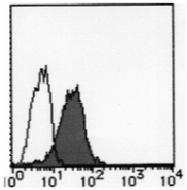 AM26444BT-N - Podocalyxin / PODXL