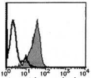AM26444FC-N - Podocalyxin / PODXL