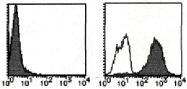 AM26444RP-N - Podocalyxin / PODXL