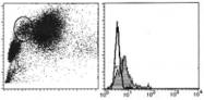 AM26450AF-N - CD151 / TSPAN24