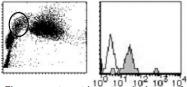 AM26450RP-N - CD151 / TSPAN24