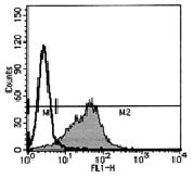 AM26451AF-N - CD193 / CCR3