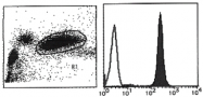 AM26453AF-N - Vanin-2 / FOAP-4