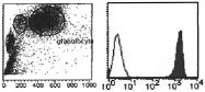 AM26453RP-N - Vanin-2 / FOAP-4