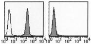 AM26457AF-N - CD274 / PDL1