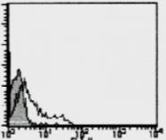 AM26474FC-N - CD195 / CCR5