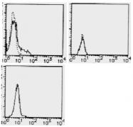 AM26478AF-N - CD274 / PDL1