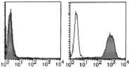 AM26478RP-N - CD274 / PDL1