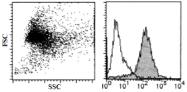 AM26482AF-N - CD98 / SLC3A2
