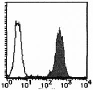 AM26483AF-N - CD98 / SLC3A2