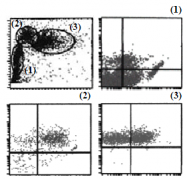 AM26503AF-N - CD226 / DNAM1