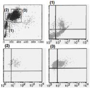 AM26503FC-N - CD226 / DNAM1
