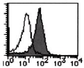 AM26505AF-N - CD112 / Nectin 2
