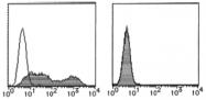 AM26513FC-N - Podoplanin