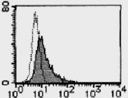 AM26515AF-N - Galectin-9