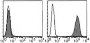 AM26516RP-N - CD93 / C1QR1