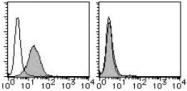 AM26519RP-N - CD268 / BAFFR