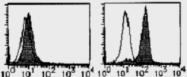 AM26522AF-N - CD284 / TLR4
