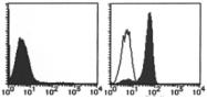 AM26523RP-N - CD284 / TLR4