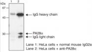 AM26530AF-N - PSME1