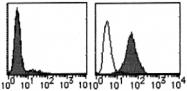 AM26532AF-N - CD273 / PDL2