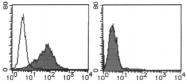 AM26533AF-N - Mesothelin