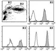 AM26548RP-N - CD50 / ICAM3