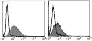 AM26549AF-N - CD54 / ICAM1