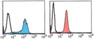 AM26565AF-N - DNA ligase 1