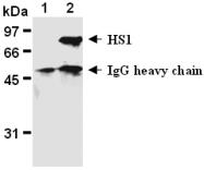 AM26574AF-N - HCLS1