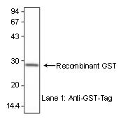 AM26618AF-N - GST-Tag