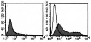 AM26622AF-N - Podocalyxin / PODXL